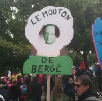 Hollande le mouton de Berger